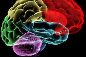 tumeur du cerveau datant site