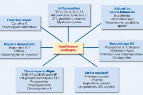 Actualités des biomarqueurs dans l'insuffisance cardiaque ...